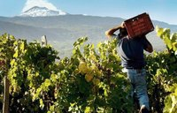 Etna wijnen zijn hot, lava-hot!